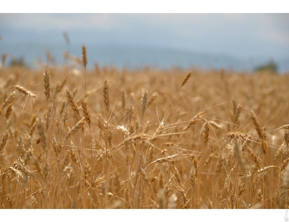 Такого урожая давно небыло— Зерновой рекорд РФ