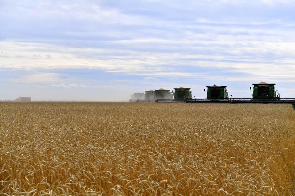 4,5 млн тонн зерна намолочено в Казахстане – МСХ