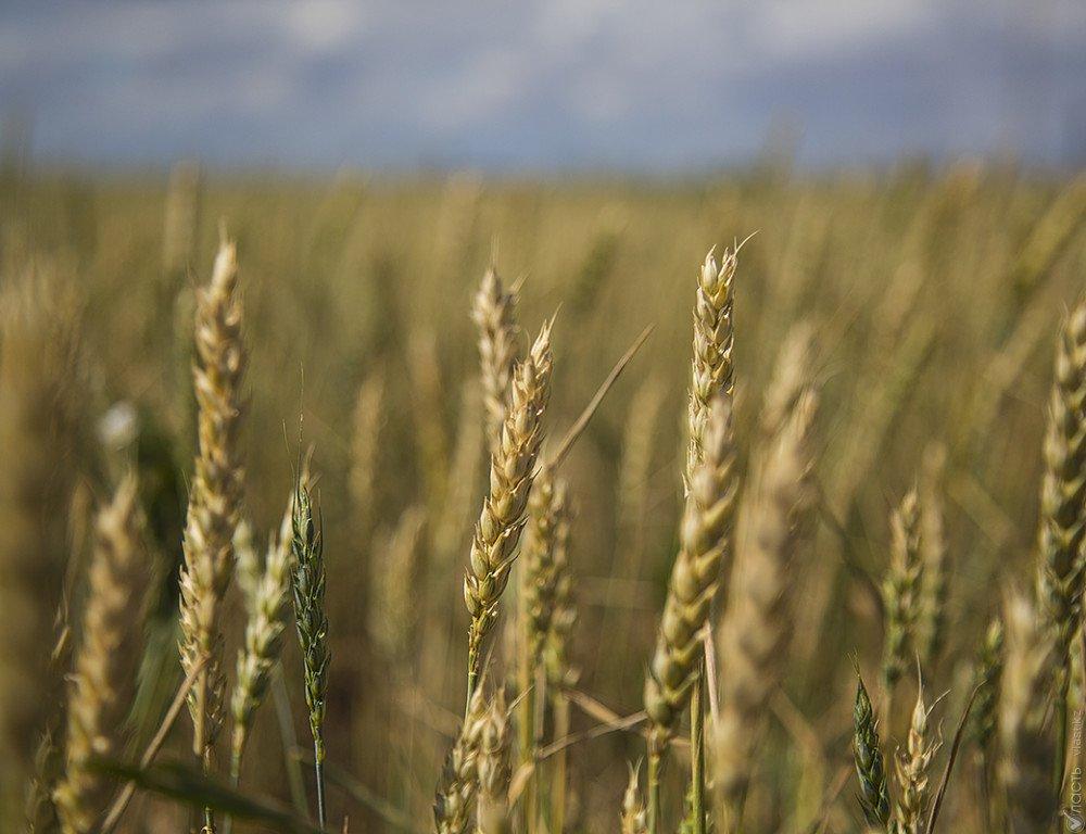 Рекордный урожай зерна— неменее 2,2 млн тонн, собрали Курганские аграрии