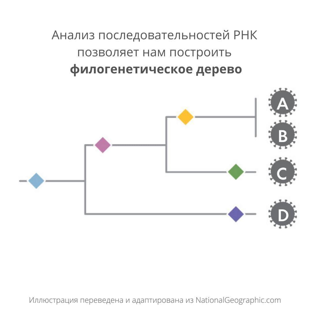 Как изменяется коронавирус? Что знает наука о мутациях и штаммах COVID-19. Объясняет молекулярный биолог